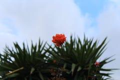 Naturgrenneryblommor royaltyfri fotografi