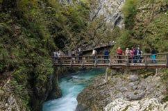 Naturhöstlandskap Vattenfall på Soteska Vintgar Slovenien royaltyfria foton