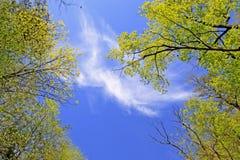 Naturhintergrund Stockbild