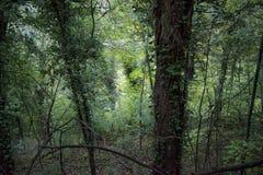 Naturhintergrund bestanden aus Bäumen lizenzfreies stockbild