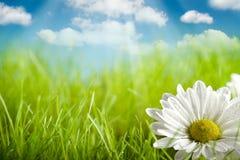 Naturhintergrund - Blume auf grünem Feld Stockfotos