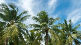 Naturhintergrund der Kokosnuss und des blauen Himmels stockfoto