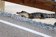 Naturhintergrund der wild lebenden Tiere im Huntington Beach-Nationalpark, S Stockbilder