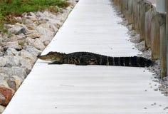 Naturhintergrund der wild lebenden Tiere im Huntington Beach-Nationalpark, S Stockfotos