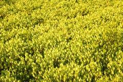 Naturhintergrund des gelben Blattes Lizenzfreies Stockfoto