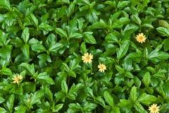 Naturhintergrund des grünen Blattes und der gelben Blume Lizenzfreie Stockbilder