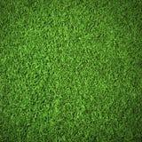 Naturhintergrund des grünen strukturierten Grases Lizenzfreies Stockbild
