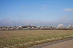 Naturhintergrund, Felder im decenber und bereifte Bäume Lizenzfreies Stockfoto