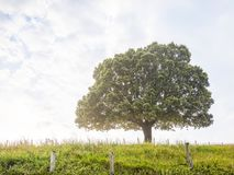 Naturhintergrund mit Baum und Gras Lizenzfreie Stockfotos