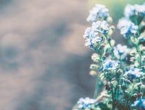 Naturhintergrund mit blauer Vergissmeinnichtblume Stockbilder