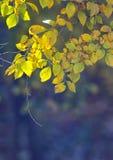 Naturhintergrund mit gelben Blättern Stockbild