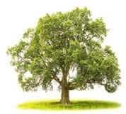 Naturhintergrund mit grünem Baum und Gras Stockfotos