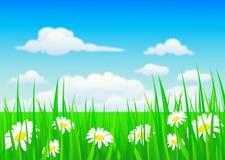 Naturhintergrund mit Gras und Blumen stock abbildung