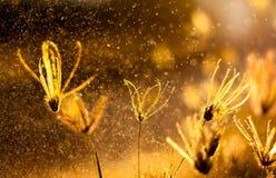 Naturhintergrund mit Gras und Sonnenuntergang Lizenzfreies Stockbild