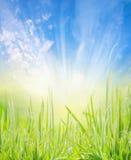 Naturhintergrund mit jungem Gras, blauem Himmel und Sonne strahlt aus Lizenzfreie Stockfotografie