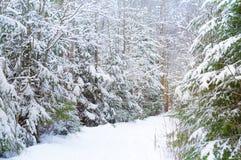 Naturhintergrund mit schneebedeckter Straße im Wald Stockfotografie
