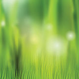 Naturhintergrund mit unscharfem Gras und bokeh Stockfoto