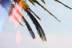 Naturhintergrund, Palmblattbäume gegen blauen Himmel tapezieren, Sommerferien Meer, Sommer, Feiertag, Ferien, Wanderlust backgro Stockfotos
