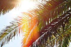 Naturhintergrund, Palmblattbäume gegen blauen Himmel tapezieren, Sommerferien Meer, Sommer, Feiertag, Ferien, Wanderlust backgro Lizenzfreie Stockfotografie