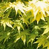 Naturhintergrund von Baumblättern Lizenzfreies Stockbild