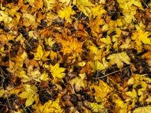Naturhintergrund von orange und gelben Ahornblättern lizenzfreies stockbild