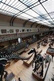 Naturhistoriamuseum i Paris Fotografering för Bildbyråer