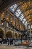 Naturhistoriamuseum - London - England Arkivfoto