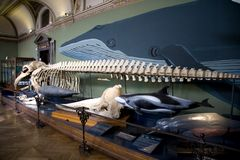 Naturhistorisches Museum exposition Stock Photography