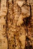 Naturholzbeschaffenheit Lizenzfreies Stockbild