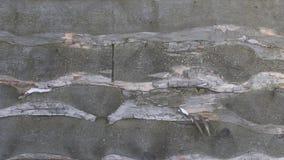 Naturholzzaun mit Welpen stock footage