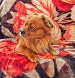 Naturhund Royaltyfri Bild