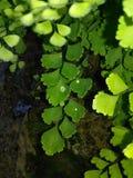 Naturklick Royaltyfria Bilder