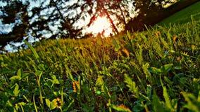 Naturkulle Fotografering för Bildbyråer