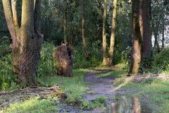 Naturlandschaft entlang dem Fluss Nieuwe Merwede Stockfoto