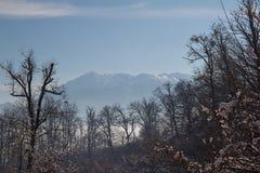 Naturlandschaft geschossen im Winter Stockbild