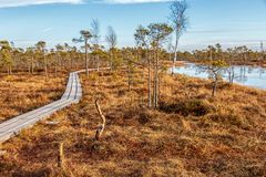 Naturlandschaft mit eisigem kaltem Sumpf mit eisigem Boden, Eis auf Sumpfsee, hölzernem Fußweg und schlechter Sumpfvegetation stockbilder
