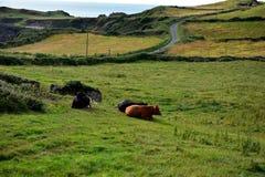 Naturlandschaften Lizenzfreies Stockfoto