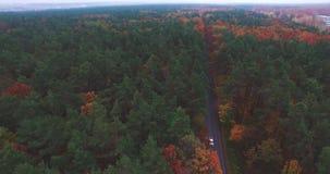 Naturlandschaftswald auf dem Horizontauto bewegt sich entlang die Straße stock video footage