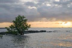 Naturlandskap av fartyg på stranden på solnedgången arkivbilder