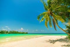 Naturlandskap: Den fantastiska sandiga tropiska stranden med kokosnötpalmträdet och kristallklart havsvatten på bakgrund slösar s Royaltyfri Bild
