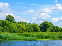 Naturlandskap med sjöflodträd i skogvasser och ängen på en solig vårsommardag med blå partisk molnig himmel arkivbild