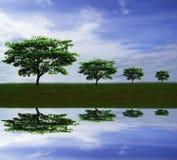 Naturlandskap, valnöt för regnträd eller för östlig indier eller siden- träd mot bakgrund för blå himmel i bygd med vattenreflexi fotografering för bildbyråer