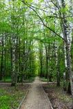 Naturlandskapsikt av en bana i en grön skog på solig vårsommardag med gräsplansida- och trädfotoet arkivbilder