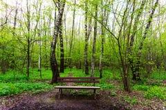 Naturlandskapsikt av en grön skogdjungel på vårsäsong med ensamma bruna bänkgräsplanträd och sidor Fridsamt stillsamt royaltyfria bilder