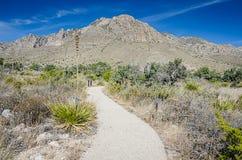 Naturlehrpfad - Guadalupe Mountains National Park Lizenzfreies Stockbild