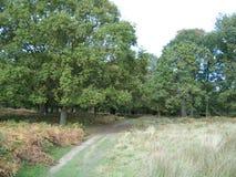 Naturlehrpfad im königlichen Park Stockfoto