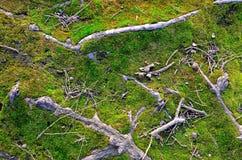 naturlig abstrakt bakgrund Arkivfoto