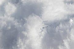 Naturlig andbild som snidas i snökristaller arkivfoton