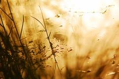 naturlig bakgrund Royaltyfria Bilder