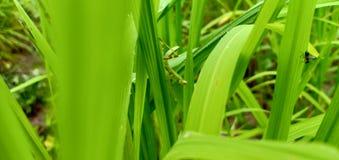 Naturlig bakgrund för grässhoppare royaltyfria foton